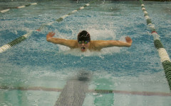Lone shark swims at State