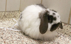 Jump to the humane society for hoppy hour